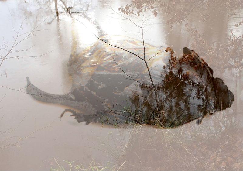 URSULA NEUBAUER   Symbiosis : The signature of all things
